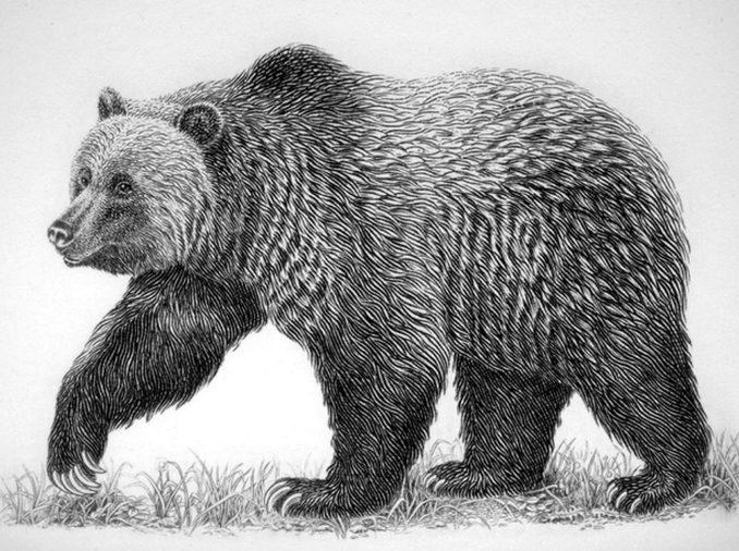 Daisy the bear